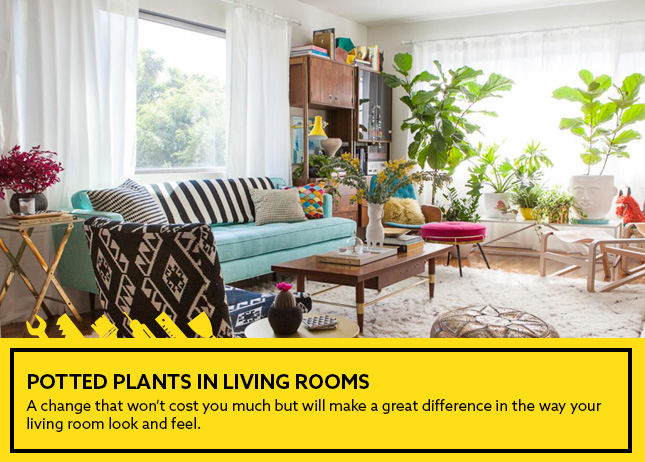 Potted Plants in living rooms