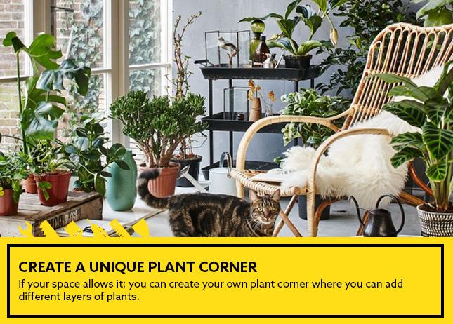 Create a unique plant corner
