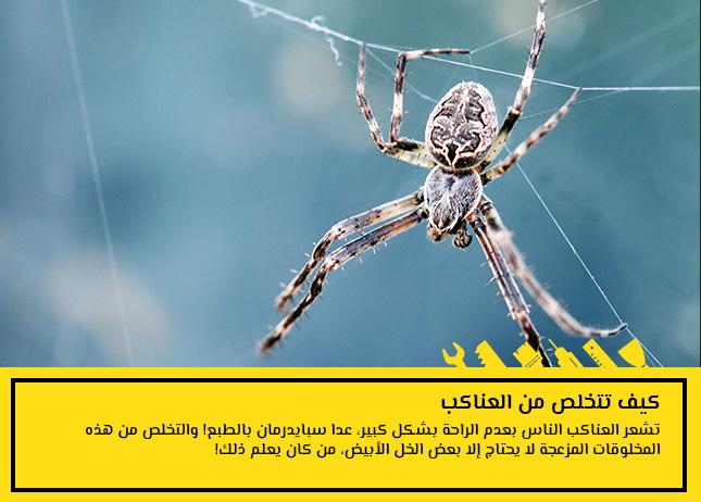 كيف تتخلص من العناكب