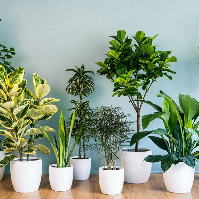 اليد الخضراء: العناية بالنباتات المنزلية في خطوات سهلة