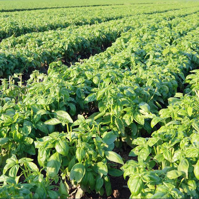 مبيدات طبيعية: كيف تتخلص من الحشرات المنزلية