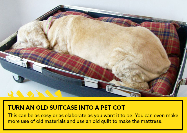 Turn an old suitcase into a pet cot