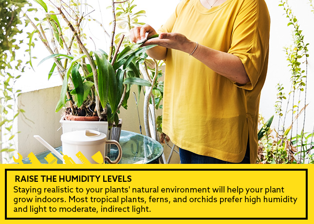 Raise the Humidity Levels