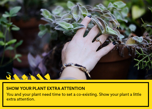 Show your plant extra attention