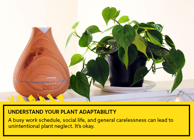 Understand Your Plant Adaptability
