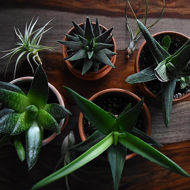 انواع النباتات المنزلية وكيفية العناية بها