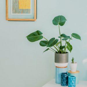 النباتات الداخلية: كيف تختار النبات المناسب لتزين منزلك؟